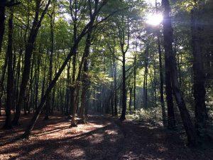 Gozd Stražun